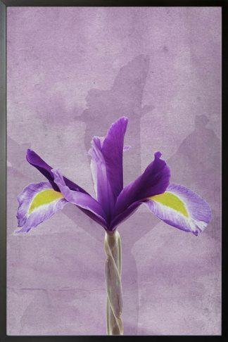 Purple flower in grunge background poster