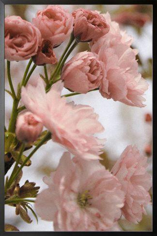 Lovely flower poster