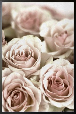 Bunch of pinkish roses poster