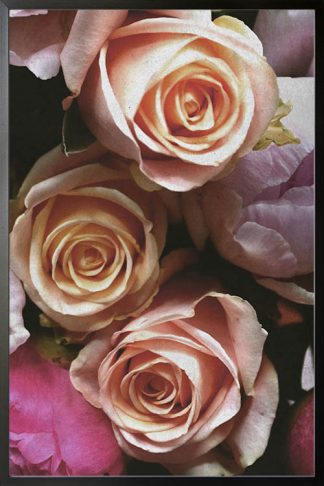 Hybrid tea roses poster