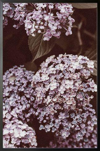 Alyssum flower poster