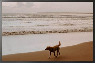 Dog on beach photography poster