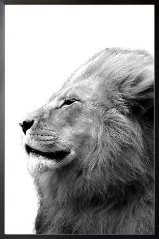 Side view of animal Lion poster