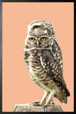 Twinning owl poster with frame