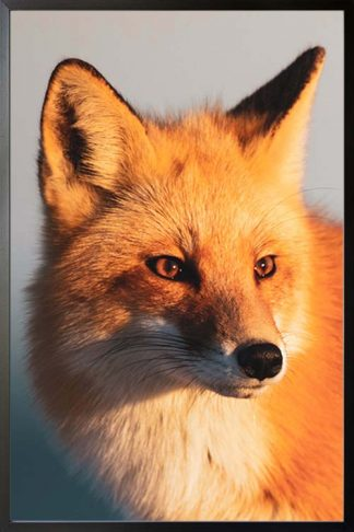 Fox face animal poster with frame