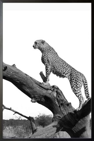 Leopard on tree poster