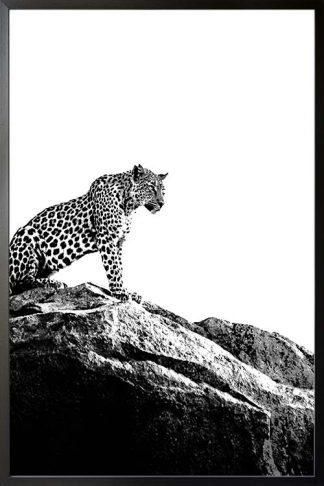 Leopard on rock Poster