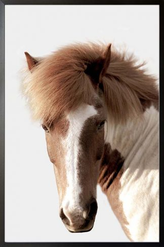 Horse in greyish background poster