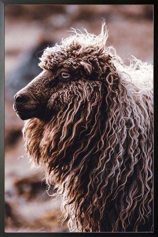 Sheep side view animal poster