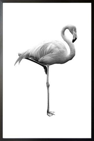 Black and white flamingo poster