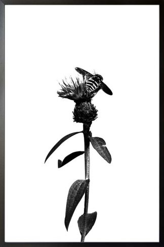 Bee on flower black and white poster