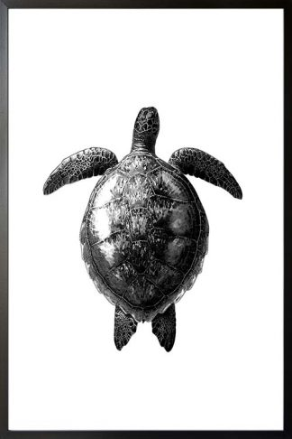 Turtle dive black and white poster