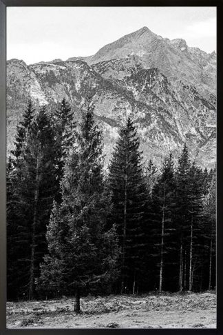 Pine tree and mountain no. 1 photography poster