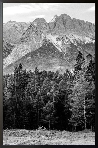 Pine tree and mountain no. 2 photography poster