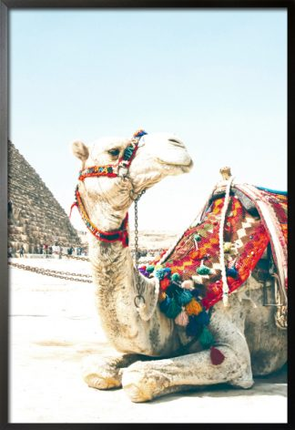Travel camel poster with frame