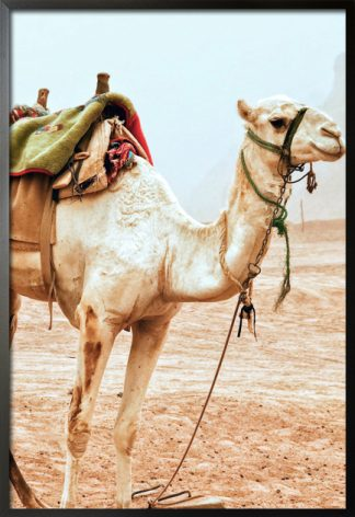 Travel camel stand up poster with frame