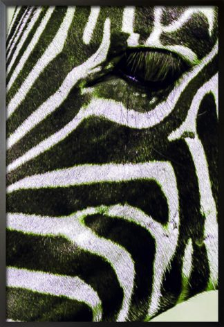 Zebra side facial view poster with frame