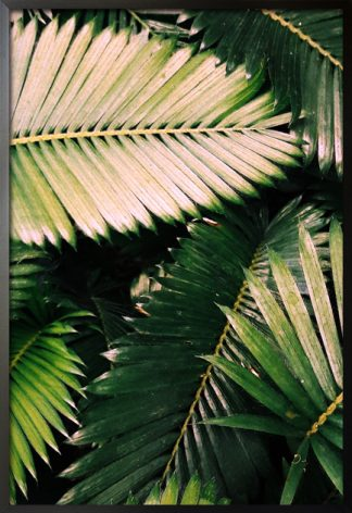 Aesthetic rainforest leaves poster with frame