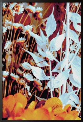 White lilies poster with frame