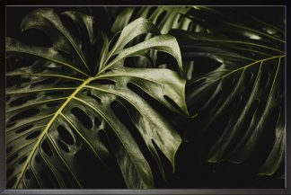 Tropical Leaf awesome photo Poster
