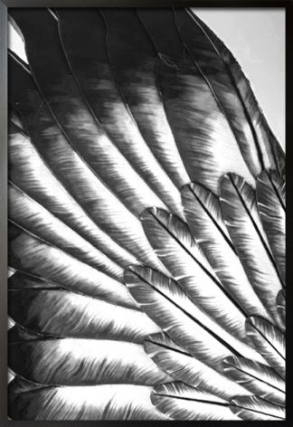 Black and white feather spread poster with frame