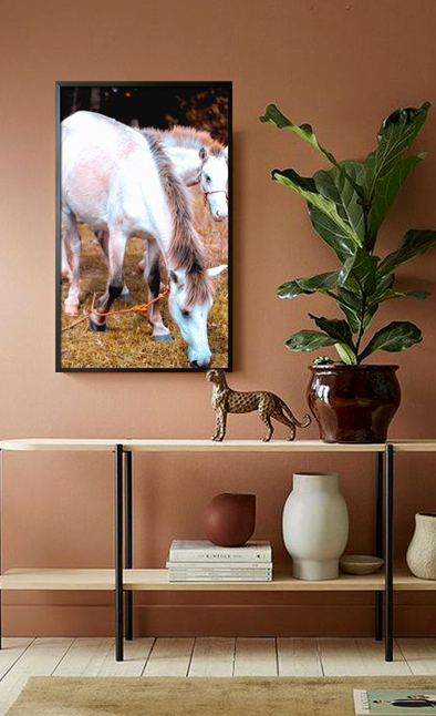 A couple of horse Poster