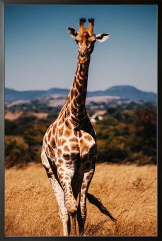 Aesthetic Giraffe Poster