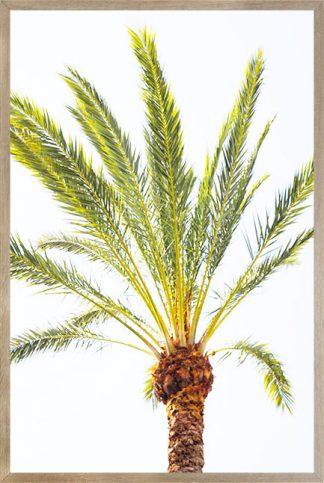 Thin palm leaves Poster