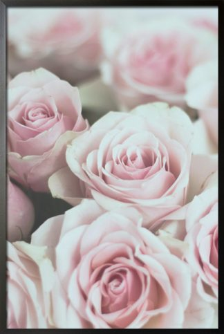 Roses pink poster