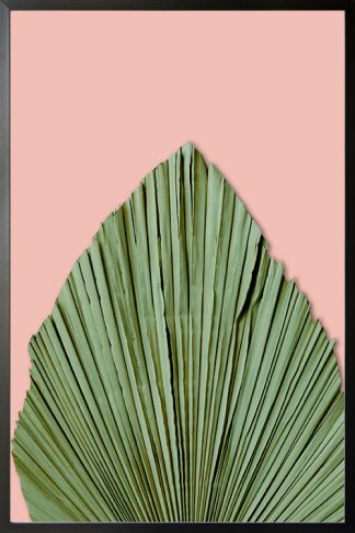 Dry palm leave on pink background poster
